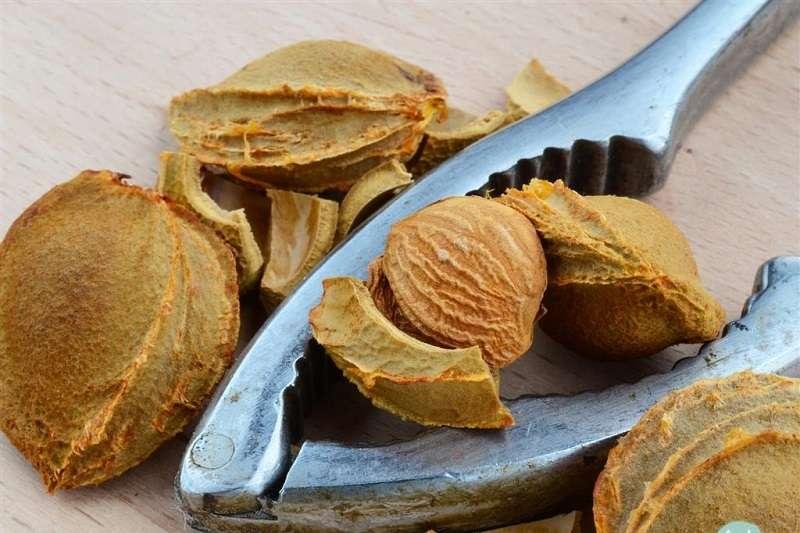 Nuts plier