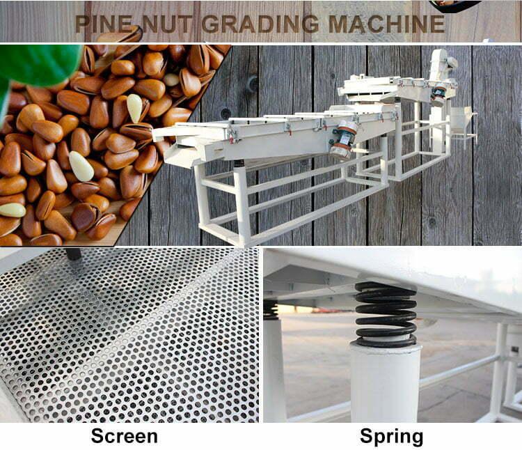 Pine nut grading machine